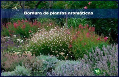 Bordura de plantas aromaticas