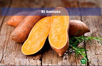 El boniato_jardineria del valles