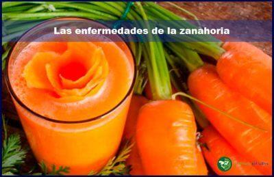 Las enfermedades de la zanahoria