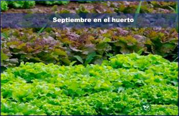Septiembre en el huerto