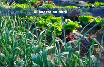 El huerto en abril