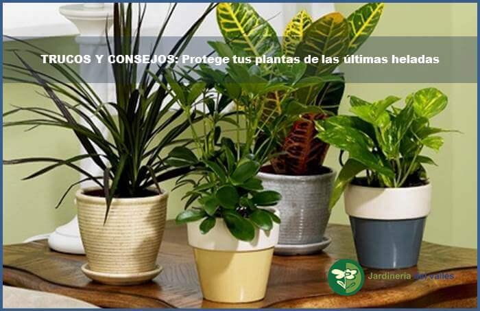 diapositiva planta