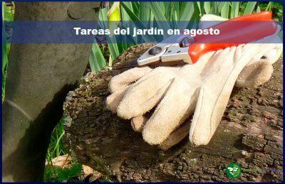 tareas del jardin en agosto