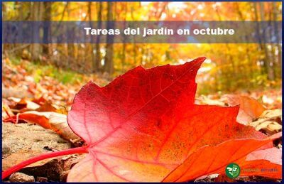 tareas jardín octubre