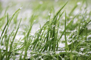 La ultima siembra del césped en otoño puede realizarse verificando la temperatura