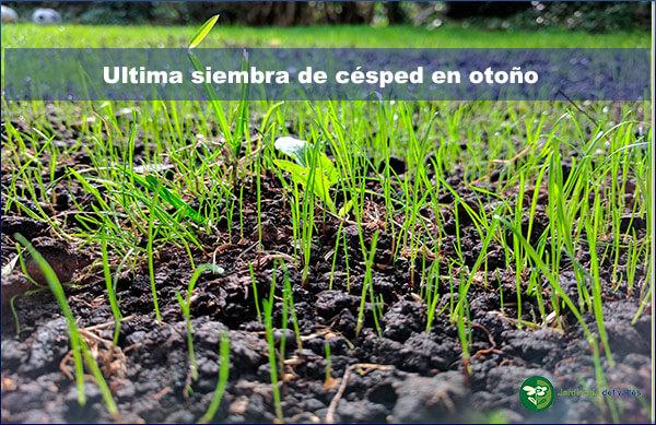 Cuando se puede realizar la ultima siembra del césped en otoño?