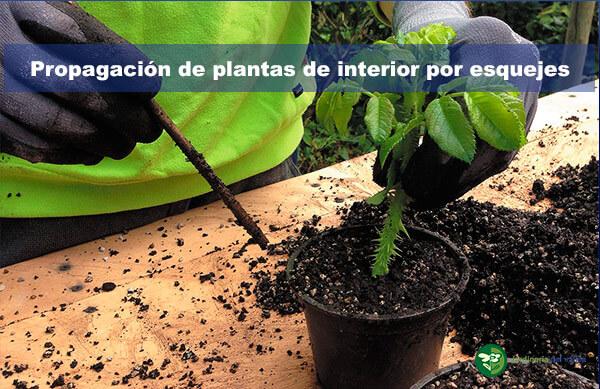 Propagación por esquejes de plantas de interior