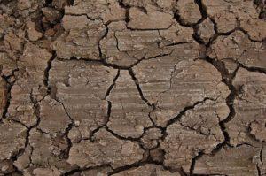 Tipo de suelo y textura