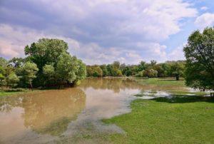 Como podemos arreglar el césped inundado