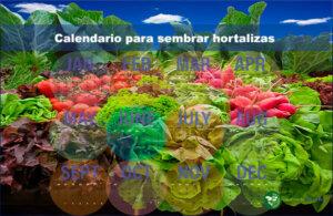 Práctico calendario para sembrar hortalizas