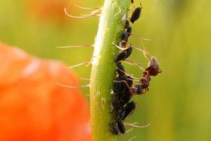 daños de las hormigas en nuestro jardín