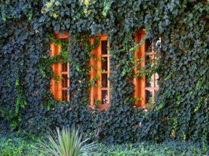 El Jardín vertical en casa