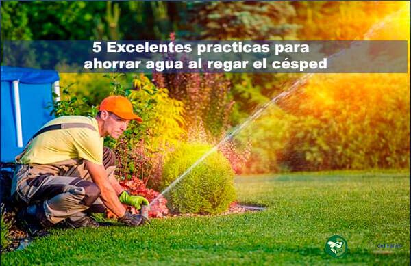 como ahorrar agua al regar césped las 5 mejores practicas