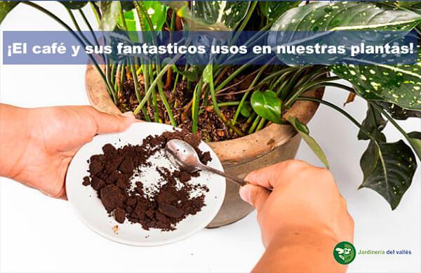 Fantàsticos usos del café en nuestras plantas