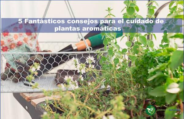 5 fantásticos consejos para el cuidado de plantas aromáticas