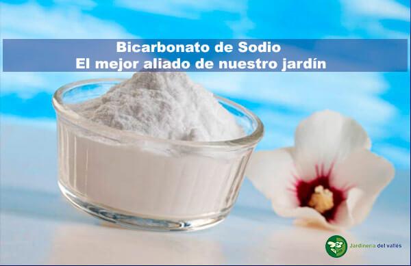 Bicarbonato de Sodio en nuestro jardín