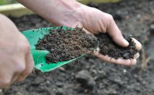 el suelo y el Bicarbonato de sodio