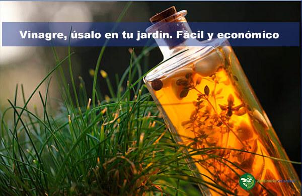 Vinagre, úsalo en tu jardín. Fácil y económico