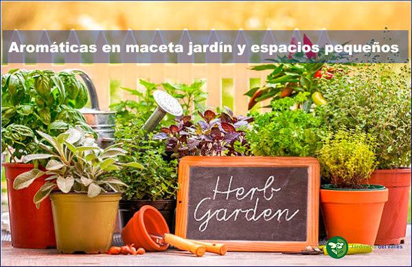 aromáticas en maceta para jardín y espacios pequeños