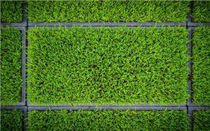 malas hierbas en el césped. variedad y fertilización
