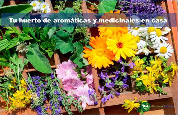 Tu huerto de aromáticas y medicinales en casa