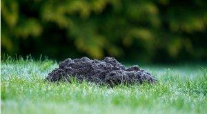 topos en el jardín el problema
