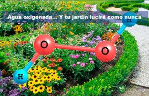 agua oxigenada y tu jardín lucirá como nunca