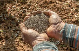 tratamiento de semillas con agua oxigenada