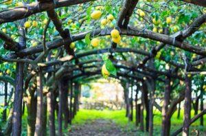 Arcos para decorar tu jardín con frutales