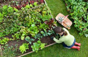 herbicidas ecológicos en nuestro huerto