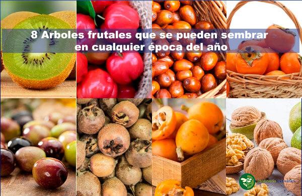 8 arboles frutales para sembrar en cualquier epoca del año