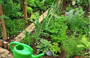 aromáticas resistentes perennes