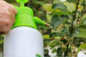 manejo de plagas y enfermedades de invierno en tu jardín