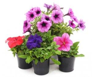Plantas artificiales con flor