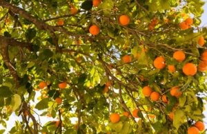 frutales y tareas del jardín en febrero