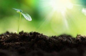 epoca ideal para sembrar dichondra repens