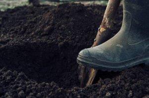 preparación del terreno para sembrar dichondra repens