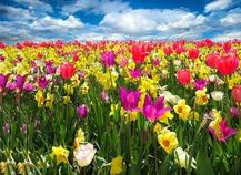Un hermoso jardín en primavera (3)