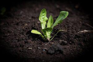 Fertilizantes ecológicos: todo lo que necesitas para tu siembra