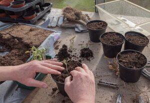 Plantas en suelo, macetas y ornamentales