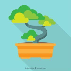 Las respuestas y los pasos acerca de un trasplante de bonsái correcto